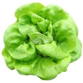 Image of Butter Head Lettuce Seeds (100 Per Packet) - Indoor & Outdoor