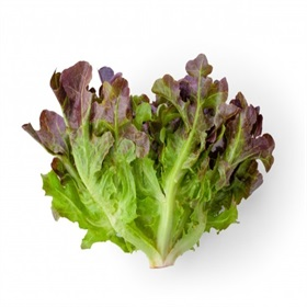 Image of Red Oak Lettuce Seeds (100 Per Packet) - Indoor & Outdoor
