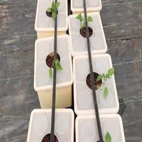 Image of Dutch Bucket With Lead For Hydroponics Planting (5 Nos.)