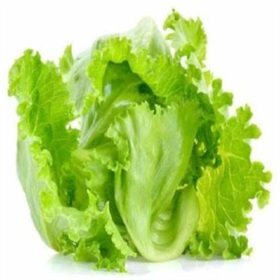 Image of Ice Berg Lettuce Seeds (100 Per Packet) - Indoor & Outdoor