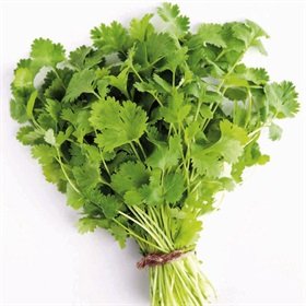 Image of Coriander Seeds (25gm Packet) - Indoor & Outdoor