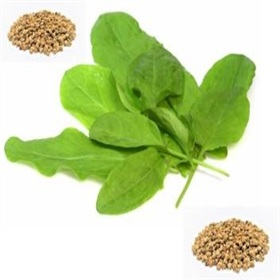 Image of Spinach Seeds (25 gm) - Indoor & Outdoor